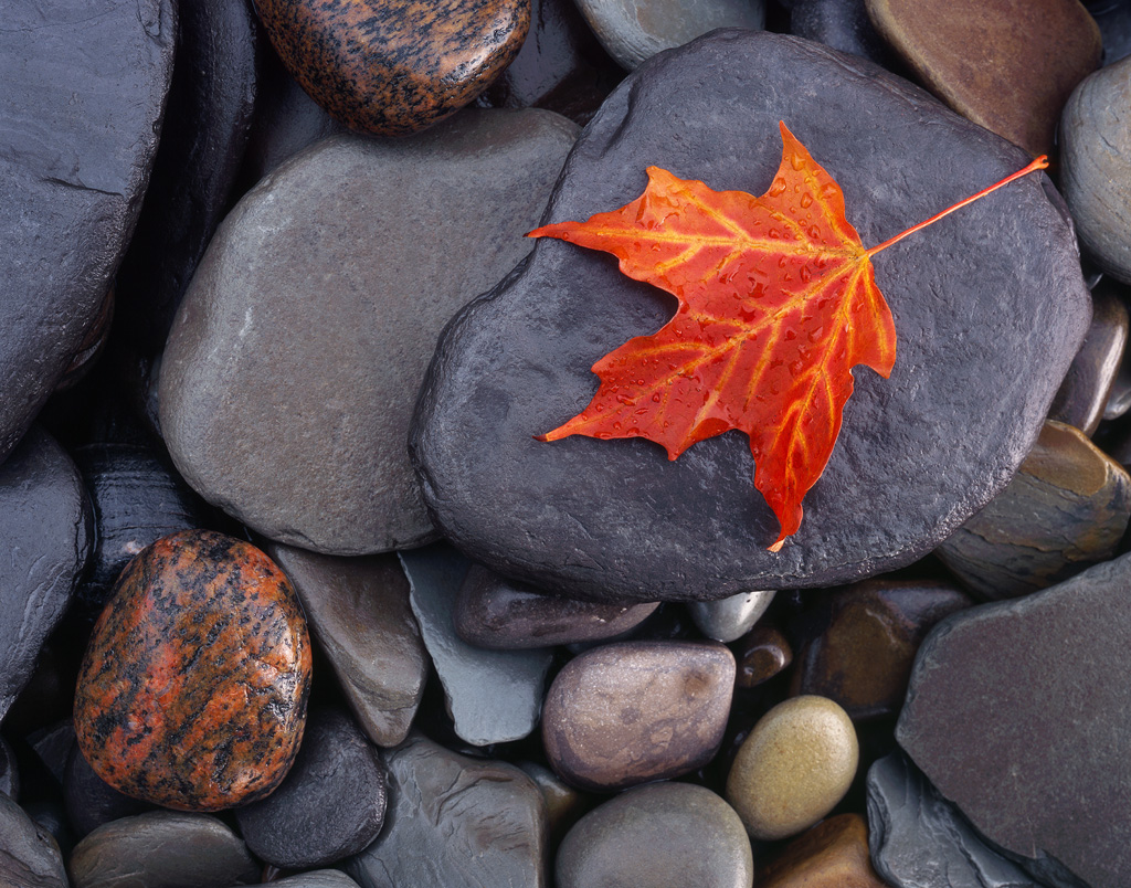 A brialliant red leaf falls onto the smooth rock shores of Lake Erie in Northern Pennsylvania.  October 2016Provia 100f 4x5, 135mm lens6 seconds at f32, warming polarizing filter