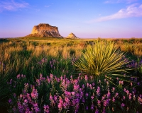Purple Wildflowers and Yucca in front of the Pawnee Buttes at sunset.  Pawnee National Grasslands, Colorado - June 2015Ektar 100 4x5, 90mm Caltar Lens1/2 second at f22 1 stop soft GND filter