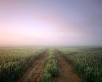 A service road through a wheat field in a morning fog.  Evening thunderstorms often result in dense fog at sunrise.  Near Greeley, Colorado - May 2014Provia 100f 4x5, 90mm Caltar Lens2 seconds at f32, 2 stop soft GND filter